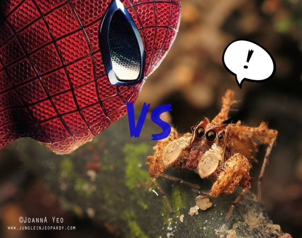 spiderman-vs-spider-jungle-in-jeopardy